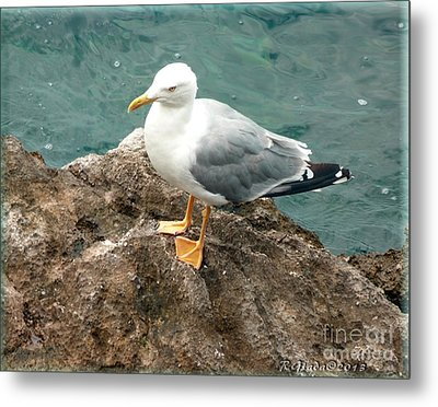 The Thinker - Seagull Photography By Giada Rossi Metal Print by Giada Rossi