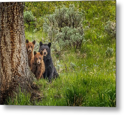 The Three Bears  Metal Print