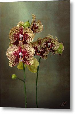 Timeless Orchid Metal Print by IM Spadecaller
