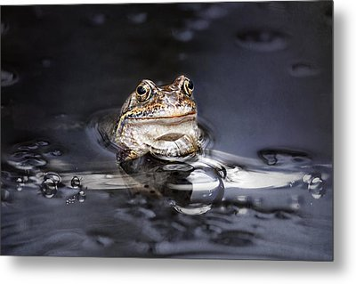 The Toad Metal Print by Heike Hultsch