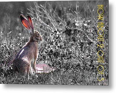 The Tortoise And The Hare How About Two Out Of Three 40d12379 Black And White Metal Print by Wingsdomain Art and Photography
