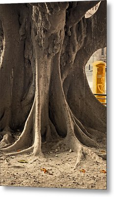 The Tree And The Post Box Metal Print by Mary Machare