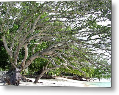 Metal Print featuring the photograph The Tree by Andrea Anderegg