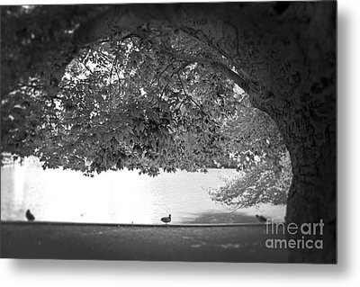 Metal Print featuring the photograph The Tree At Mill Pond by Paul Cammarata