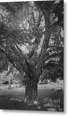 Metal Print featuring the photograph The Tree By The Lake by Paul Cammarata