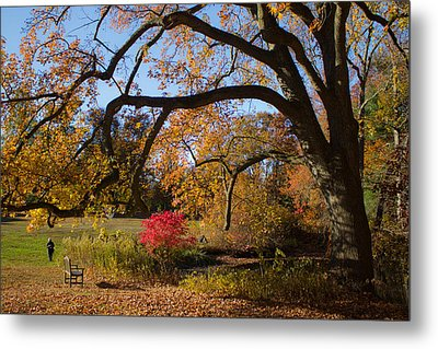 Metal Print featuring the photograph The Tree Embrace by Jose Oquendo