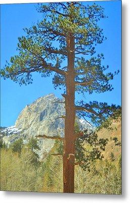 The Tree Metal Print by Marilyn Diaz