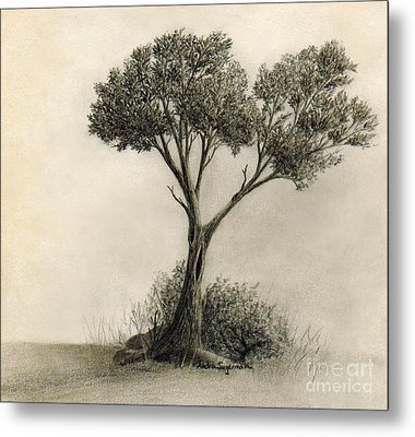 The Tree Quietly Stood Alone Metal Print by Audra D Lemke