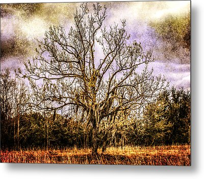 The Tree Metal Print by Steven  Taylor
