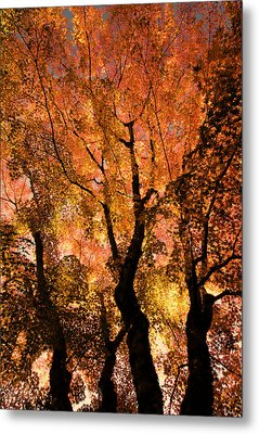 The Trees Dance As The Sun Smiles Metal Print