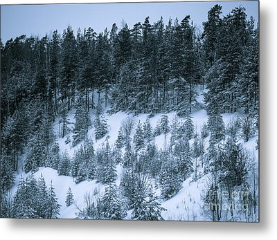 The Trees Of The Snowy Hill Metal Print