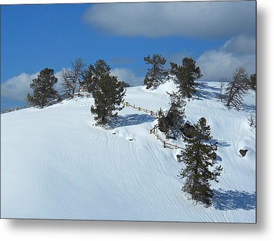 Metal Print featuring the photograph The Trees Take A Snow Day by Michele Myers