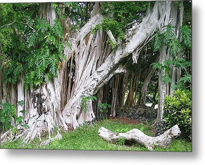 The Trunks Metal Print