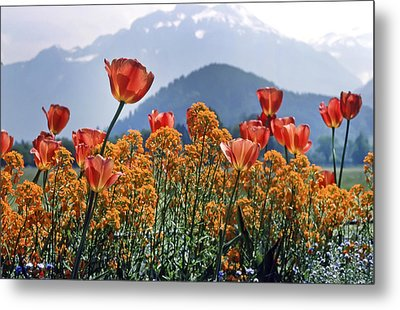 The Tulips In Bloom Metal Print