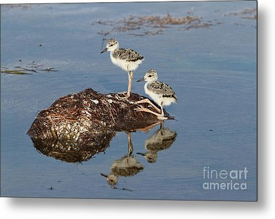 The Twins Metal Print by Jennifer Zelik