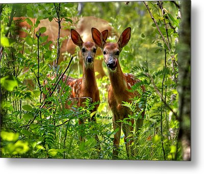 The Twins Metal Print by Larry Trupp