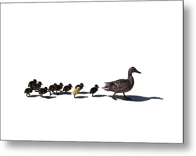 The Ugly Duckling  Metal Print by Lars Lentz