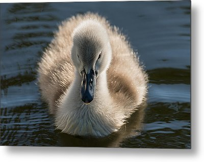 The Ugly Duckling Metal Print by Michael Mogensen