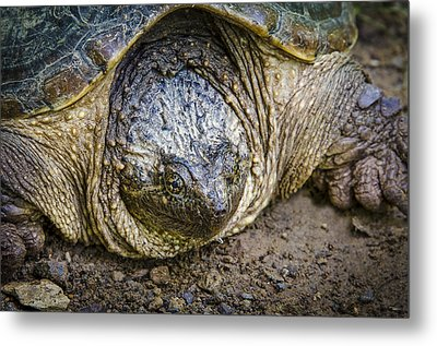 The Ugly Snapper Metal Print by Bradley Clay