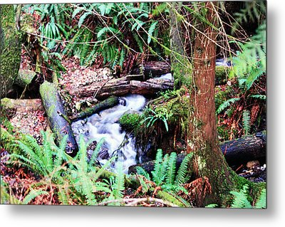 The Unknown Creek Metal Print