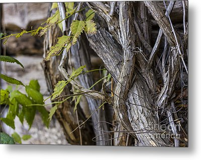 Metal Print featuring the photograph The Vines by Amber Kresge