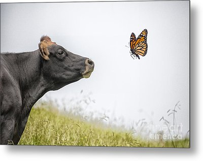 The Visitor  Metal Print by Sheila Smart Fine Art Photography