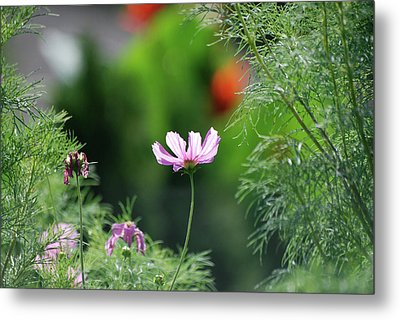 Metal Print featuring the photograph The Warmth Of Summer by Thomas Woolworth