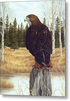 The Watchful Eye Metal Print by Rick Bainbridge