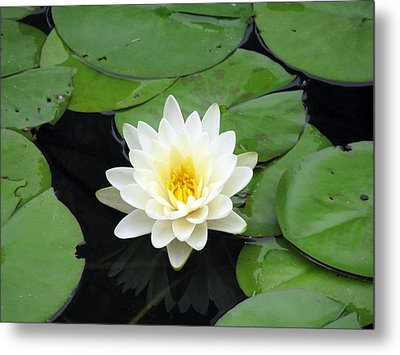 Metal Print featuring the photograph The Water Lilies Collection - 01 by Pamela Critchlow