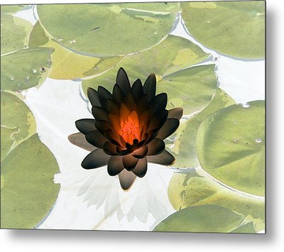 Metal Print featuring the photograph The Water Lilies Collection - Photopower 1034 by Pamela Critchlow