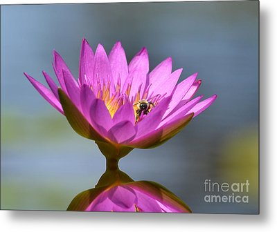 The Water Lily And The Bee Metal Print by Kathy Baccari
