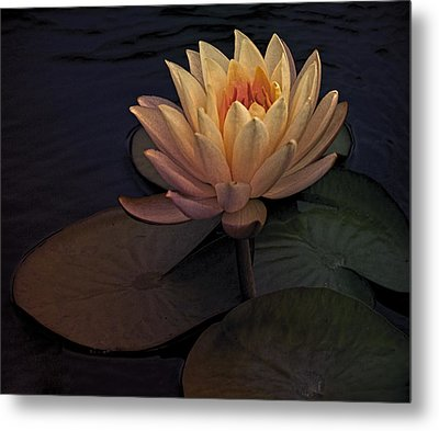 The Waterlily Metal Print by Jill Balsam