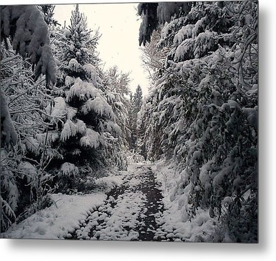 Metal Print featuring the photograph The Way In Snow by Felicia Tica