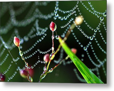 The Web And The Pods Metal Print by Carolyn Fletcher