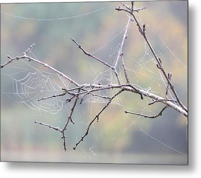 The Web's Branch Metal Print by Nikki McInnes
