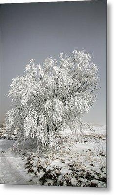 The Weight Of Winter Metal Print by John Haldane