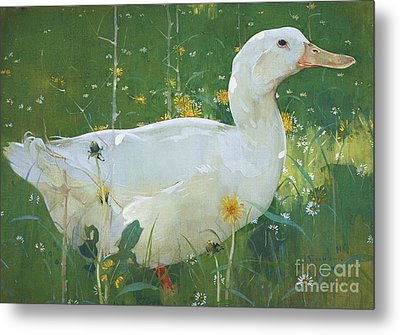 The White Drake Metal Print by Pg Reproductions