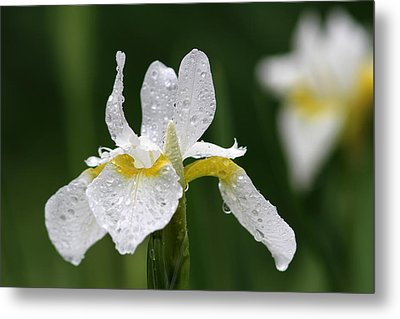 The White Iris Metal Print by Juergen Roth
