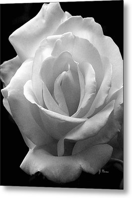 Metal Print featuring the photograph The White Rose by James C Thomas