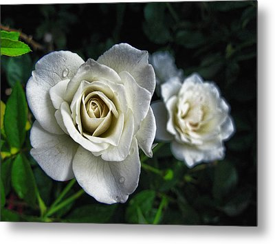 Metal Print featuring the photograph The White Rose by Oscar Alvarez Jr