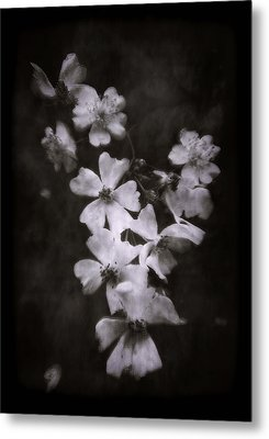 Metal Print featuring the photograph The Wild Roses by Louise Kumpf