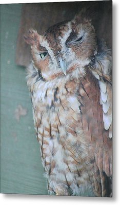 The Wink Metal Print by Rhonda Humphreys