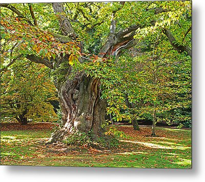 The Wise Old Tree Metal Print by Gill Billington