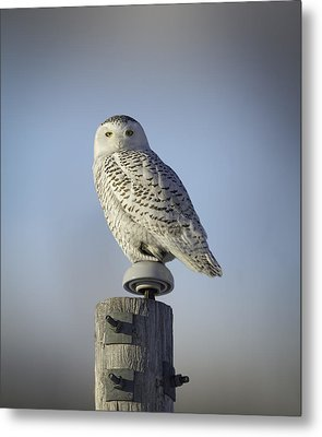 The Wise Snowy Owl Metal Print by Thomas Young
