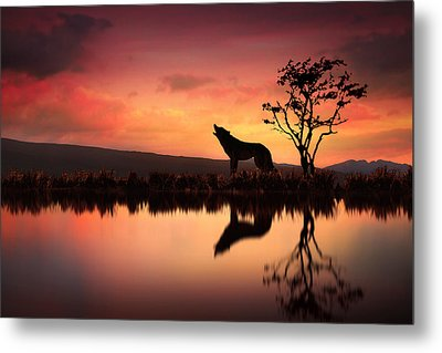 The Wolf At Sunset Metal Print by Jennifer Woodward