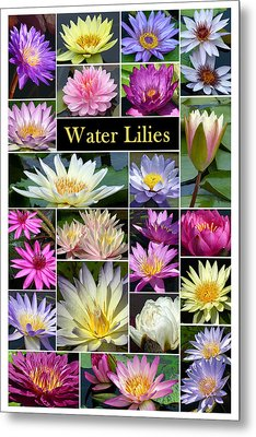 Metal Print featuring the photograph The Wonderful World Of Water Lilies by Cindy McDaniel