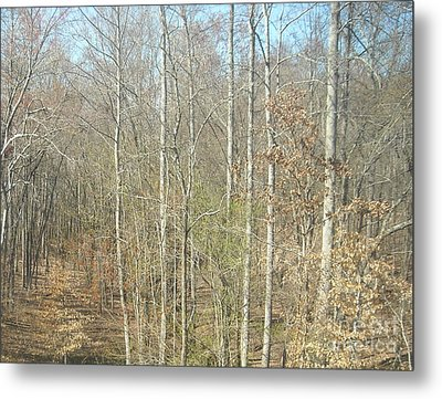 The Woods Metal Print by Joseph Baril