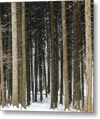 The Woods Number One Metal Print