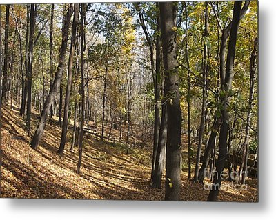 Metal Print featuring the photograph The Woods by William Norton