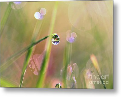 The World In A Drop Metal Print by Sylvia Cook